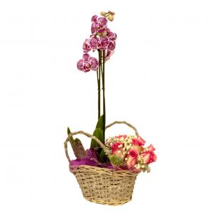 florista valongo